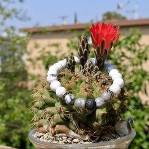 Jewelry - Howlite aromatherapy bracelet